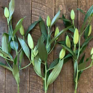white lily stems